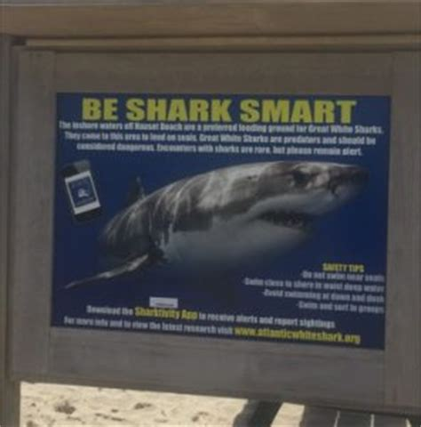 libro smart about sharks smart shark presentation to provide tips for surfers kayakers and supers
