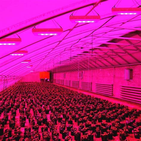 high quality ip waterproof  plant led grow light