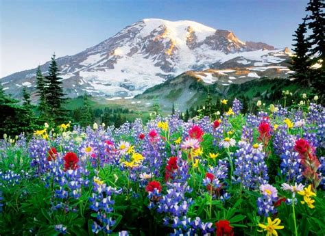 imagenes de paisajes natural image gallery naturaleza con flores fotos