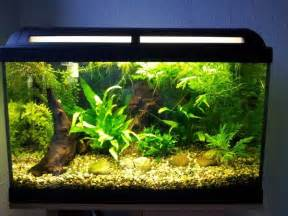aquarium designs 28 modern fish tanks that inspire relaxation