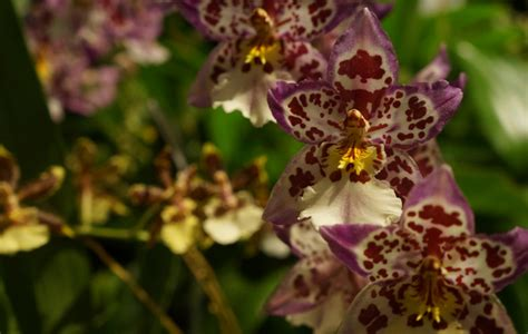 facts about orchids 5 surprising facts about orchids flower science