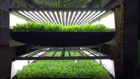 vertical farming   big   foodand tech