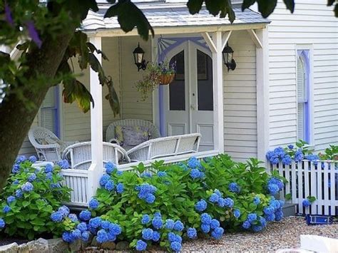 a bounty of hydrangeas on blue hydrangea pink
