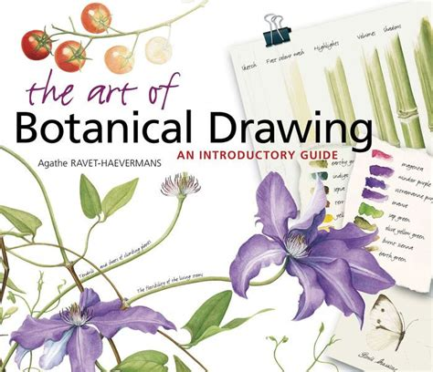 libro the art of botanical the art of botanical drawing an introductory guide by agathe ravet haevermans paperback
