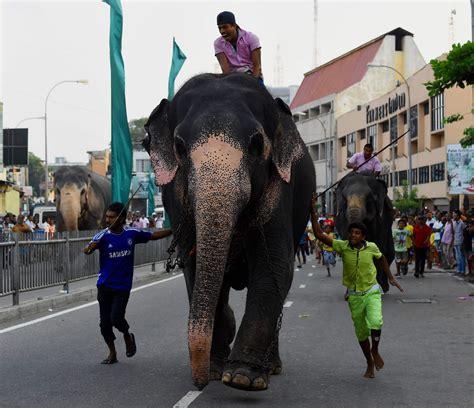 sri lanka festival new year