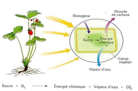 respiration et fermentation