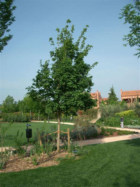 alberi da giardino piccolo alberi da giardino piccolo interesting giardino di