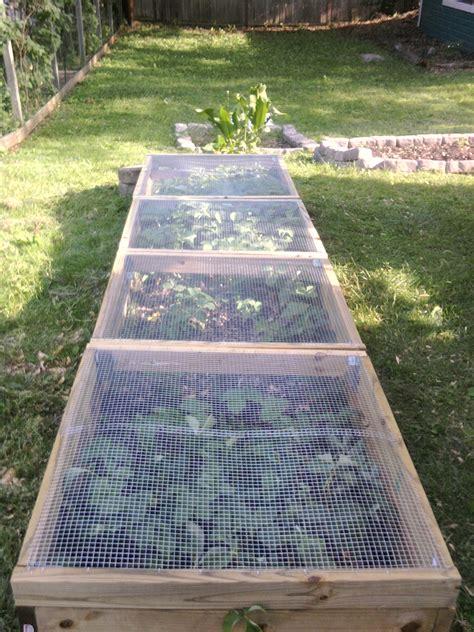 smarter berries gardening jones