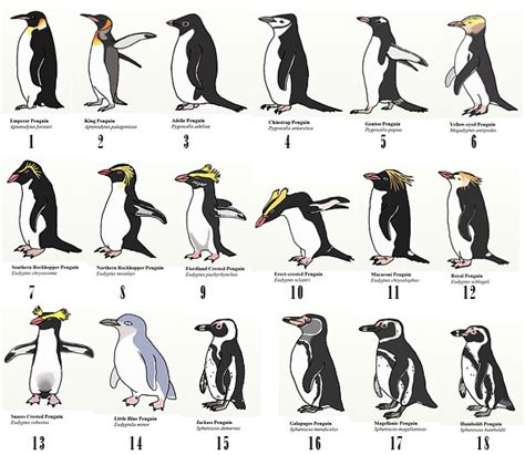 Rok Blus Pinguin penguins of antarctica dinoanimals