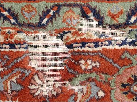 wool moths in rugs rug moth damage prevention a clean solution llc