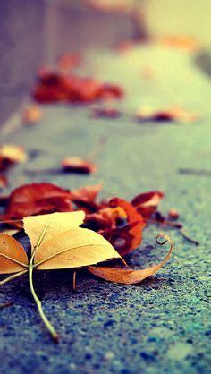 poem backgrounds images   autumn leaves