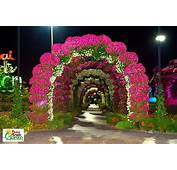 Miracle Garden Dubai  World Love Flowers