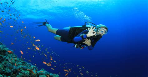 dive in koh tao scuba diving get your padi open water certification on