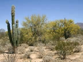 imagenes de animales y plantas del desierto ecosistemasmundiales flora del desierto calido
