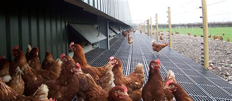 Home Design Pictures Free by Free Range Poultry Buildings