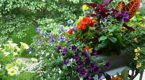 Flower Gardening Tips For Beginners Flower Gardening For Beginners Six Tips 187 Home Decorations Insight
