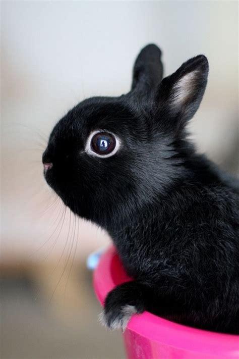 www bunny george bunny net worth 2016 update bio age height
