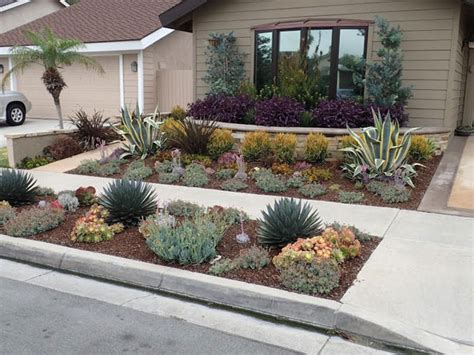drought resistant landscaping drought tolerant landscaping orange county ca drought