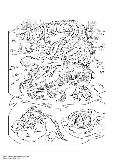 dibujo  colorear cocodrilo img