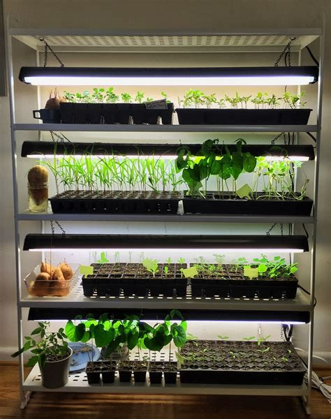 starting seeds indoors lights starting seeds indoors has never been easier since i built