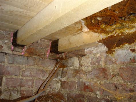 hausschwamm erkennen geruch rot timber preservation guardian d proofing