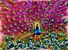 colorful peacock peacock digital by daniel janda
