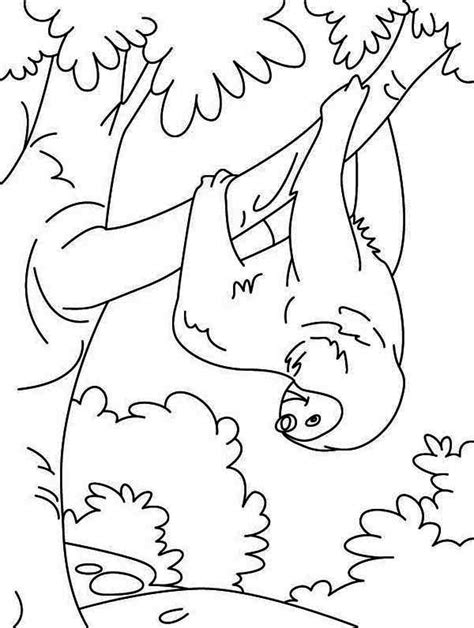 sloth face coloring coloring pages