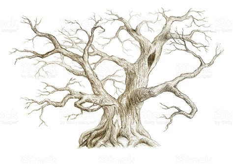 old tree with no leaves stock vector art 155440481 istock