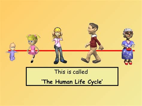 vida 3 0 life 3 0 being human in the age of artificial intelligence spanish edition human life cycle