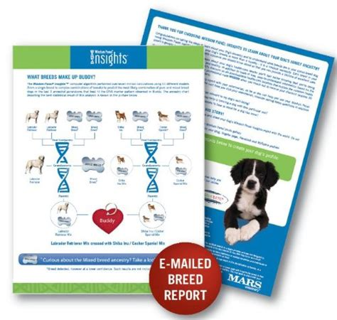 breed test kit wisdom panel mixed breed dna test kit overview buy product review d