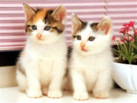 three cute kittens cute cats 3 cute cats