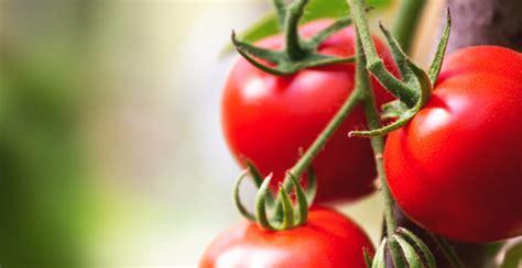 alimenti privi di scorie per ecografia alimenti senza scorie la lista di prodotti e i consigli