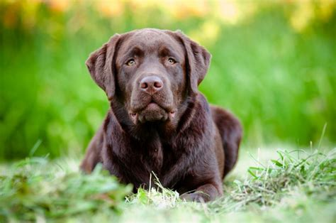 best puppy food for large breed dogs best food for large breeds pet food society