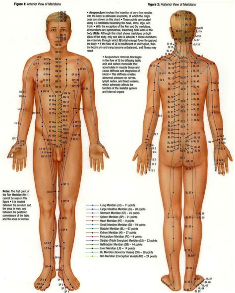 acupressure diagram of pressure points s pressure point diagrams front and