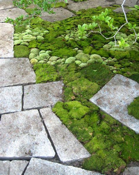Moss Garden Ideas Moss Gardening Ideas Tips