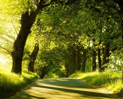 wallpaper of green forest green images green forest wallpaper wallpaper photos