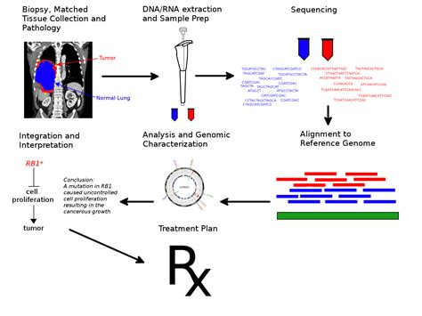 sequenziamento illumina f 225 jl cancer genome sequencing workflow png wikip 233 dia