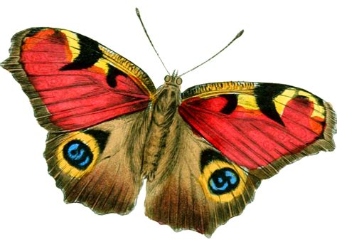 best image download png image butterfly png image clipart best