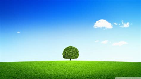 asus wallpaper tree 77 entries in grass sky wallpapers group