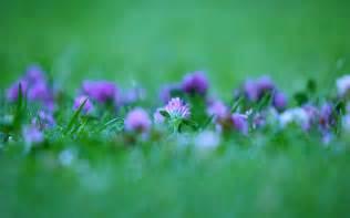 win with flower windows 7 purple flower wallpaper hd wallpapers