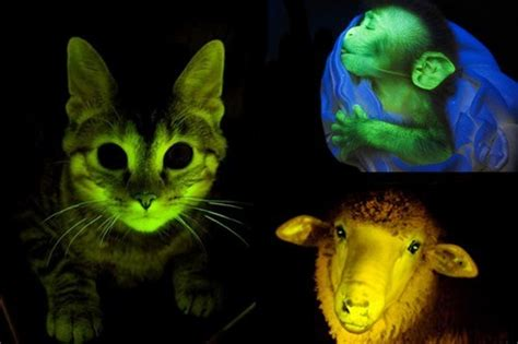 Glowing Animals 10 spectacular glowing animals wonderslist