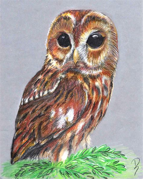 Misterbigeyes By Adorisarts On Deviantart Really Owl Drawings With Color
