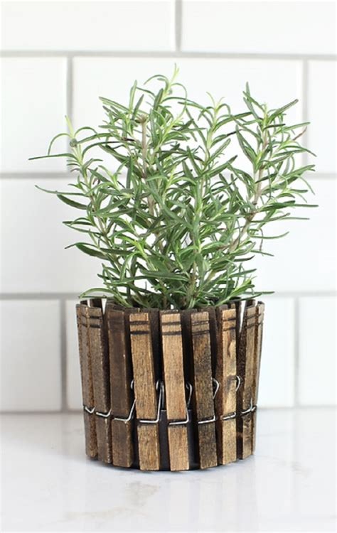 inspiring  budget unique ideas  herb containers