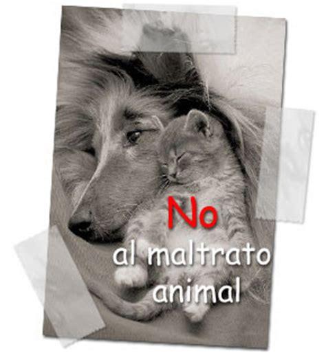 no maltrato animal maltrato animal es hora de reflexionar taringa