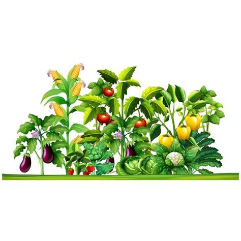 vegetable plants design vector premium download