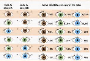 baby eye color chart baby eye color chart more like determine eye color