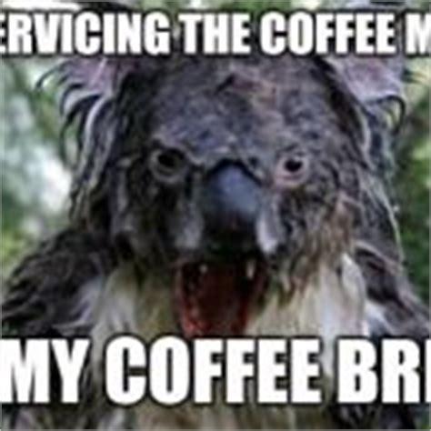 Angry Koala Meme - angry koala meme generator imgflip