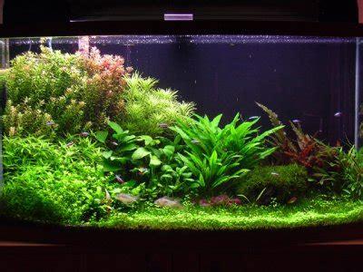 aquarium 60 l 632 types de bac aquarium eau douce aquarium hollandais