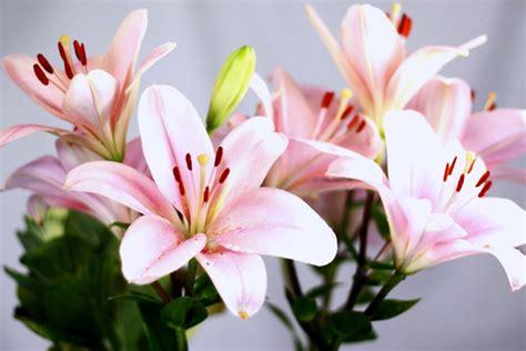 imagenes de flores naturales lilis las diez flores de boda m 225 s utilizadas el blog de mar 237 a jos 233
