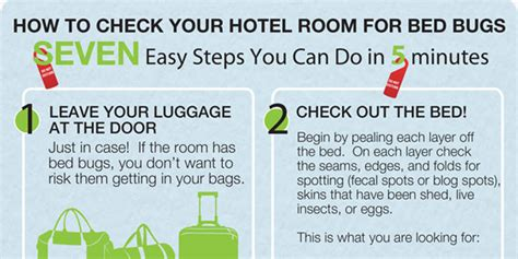 how to test for bed bugs how to check your hotel room for bed bugs infographix